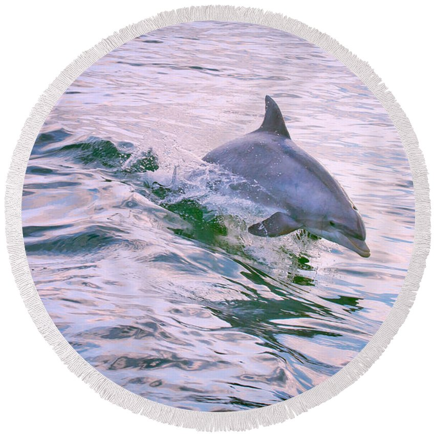 Blowhole Round Beach Towel featuring the photograph Bottle Nose Wake Rider by Pete Federico