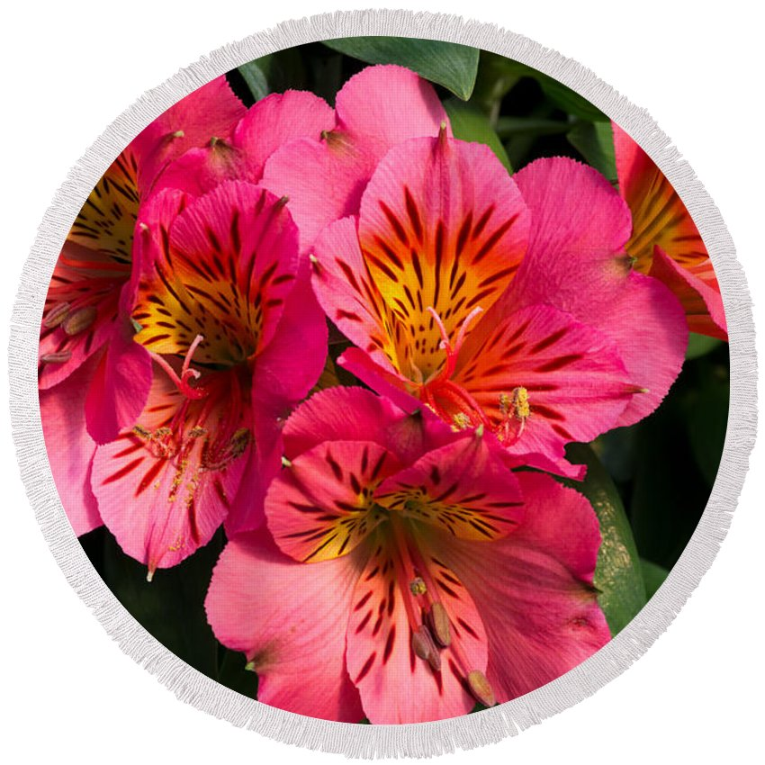 Agriculture Round Beach Towel featuring the photograph Bouquet Of Pink Lily Flowers by John Trax