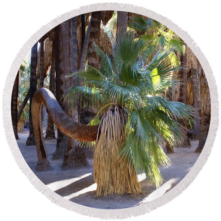 Bowing Palm Tree Round Beach Towel featuring the digital art Bowing Palm by Barbara Snyder