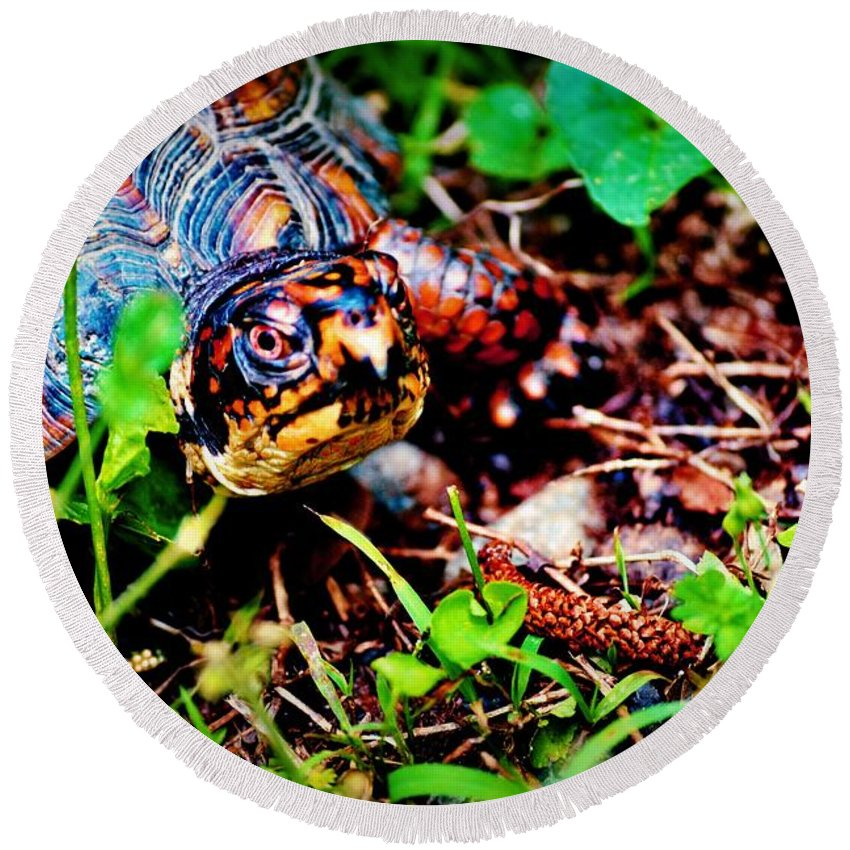 Turtle Round Beach Towel featuring the photograph Box Turtle by Tara Potts
