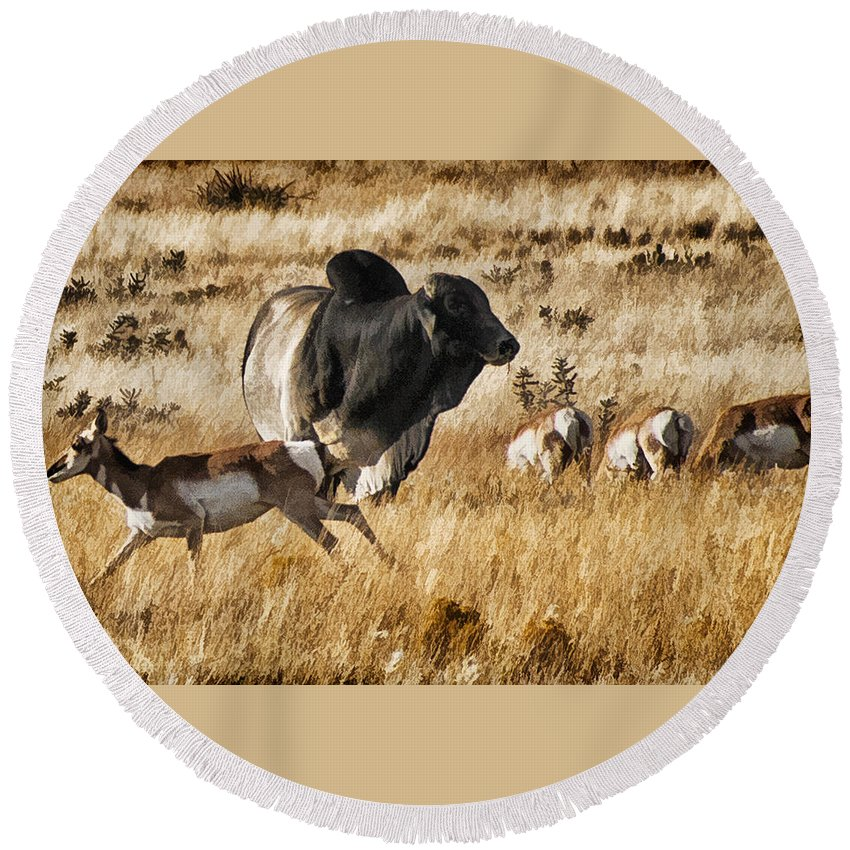 Pronghorn Round Beach Towel featuring the photograph Brahma Bull Meets The Pronghorn by Priscilla Burgers