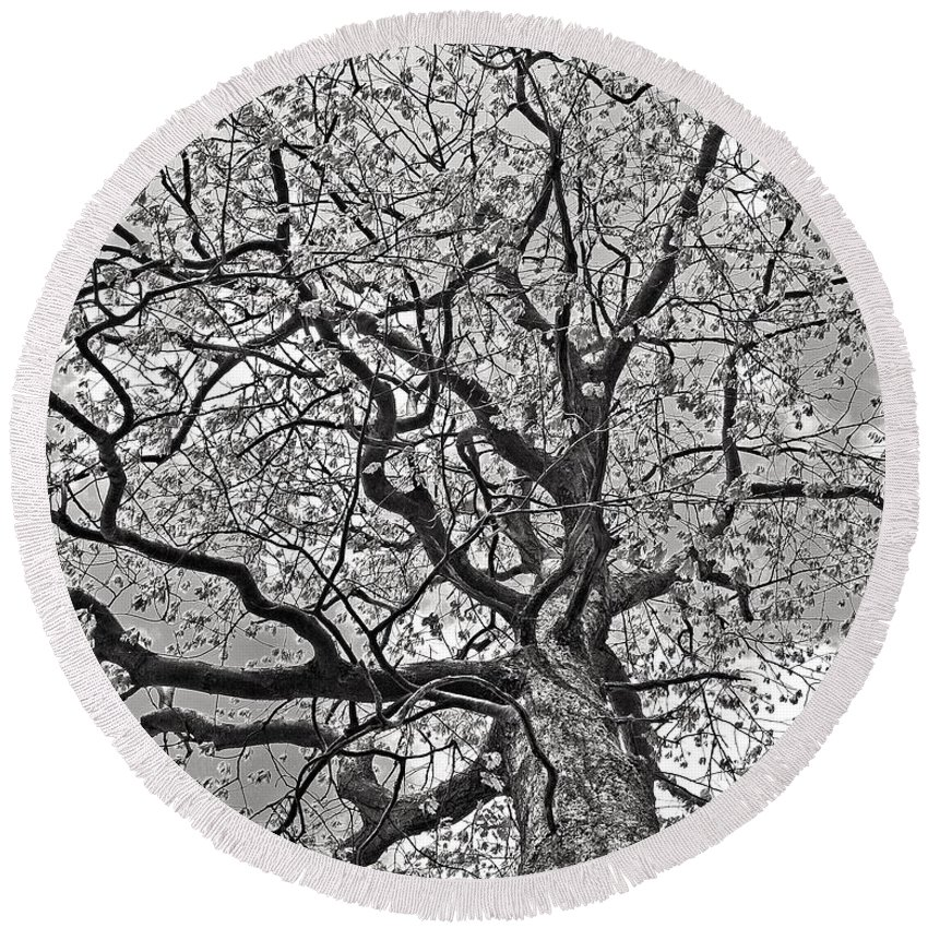 Tree Round Beach Towel featuring the photograph Branches by Laura Mace Rand