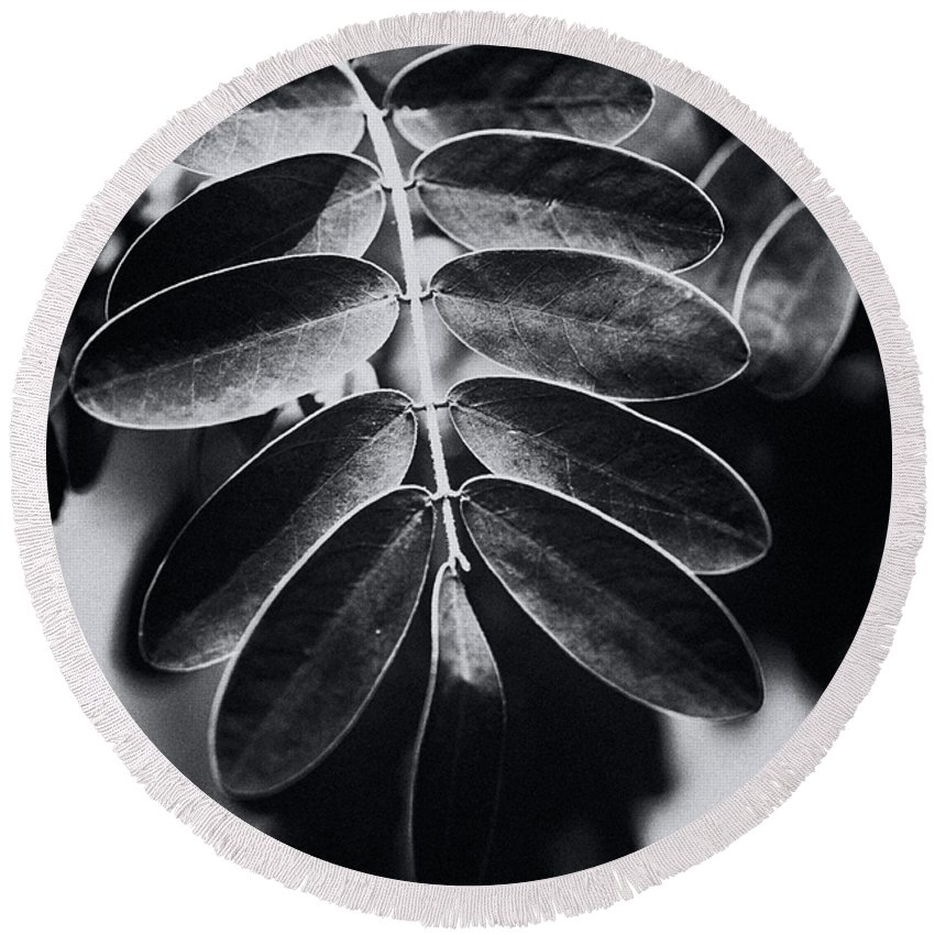 B And W Round Beach Towel featuring the photograph Branching Out by Christi Kraft