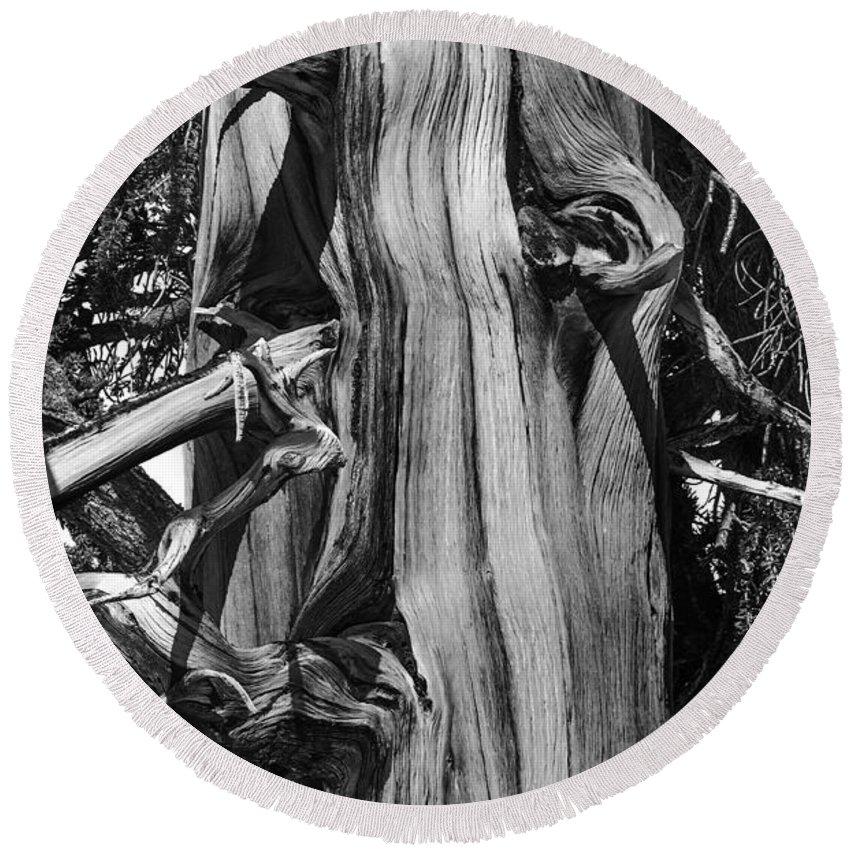 Bristle-cone Pine From Bishop Round Beach Towel featuring the photograph Bristle-cone Pine-2 by Mae Wertz