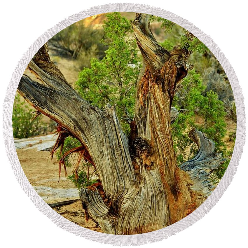 Canyonlands National Park Round Beach Towel featuring the photograph Bristlecone 1 by Marty Koch