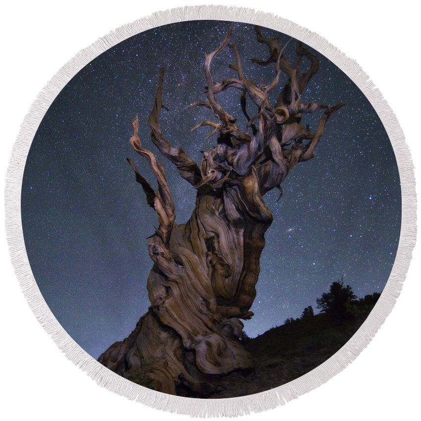 Bristlecone Pine Round Beach Towel featuring the photograph Bristlecone Ballet by Peter Coskun