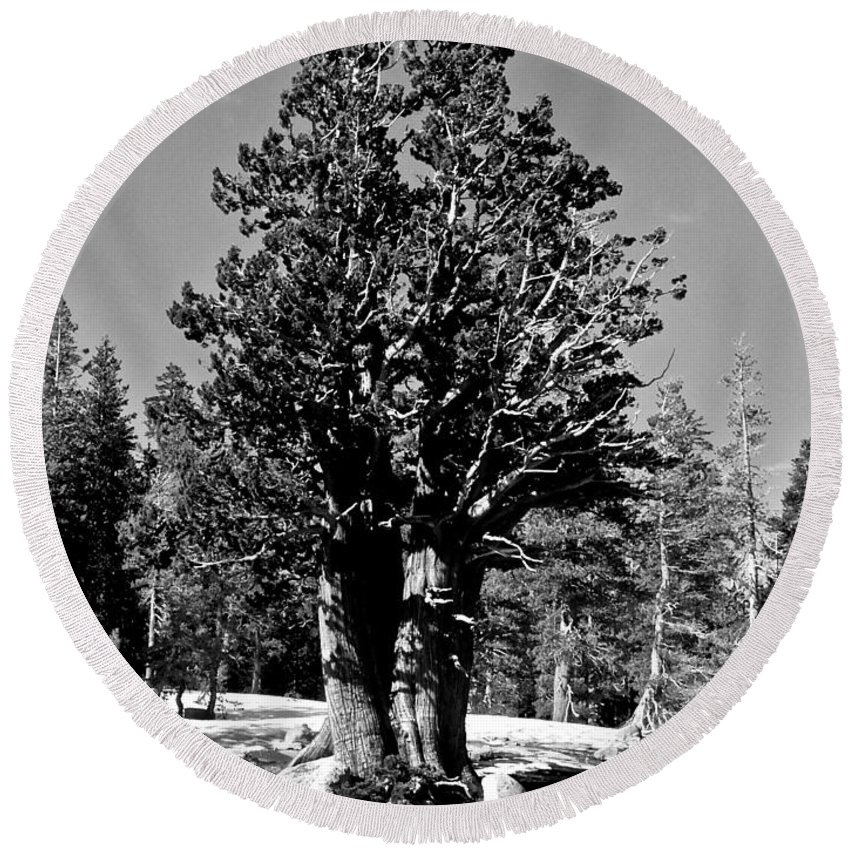Bristlecone Pine Round Beach Towel featuring the photograph Bristlecone Pine by Eric Tressler