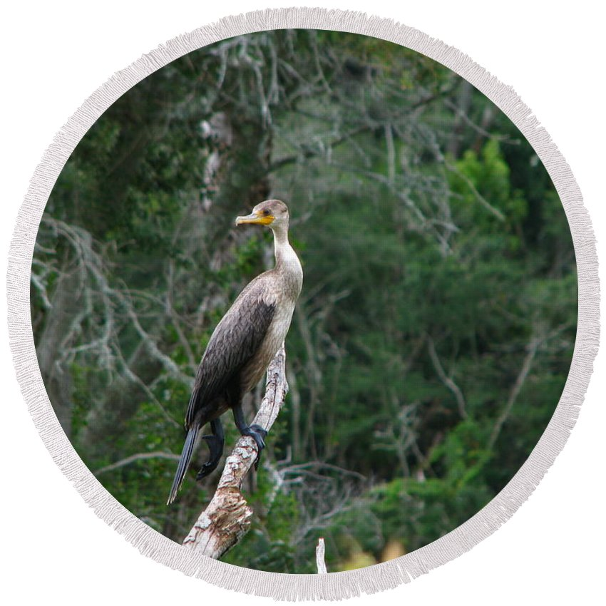 Patzer Round Beach Towel featuring the photograph Bristol Cormorant by Greg Patzer