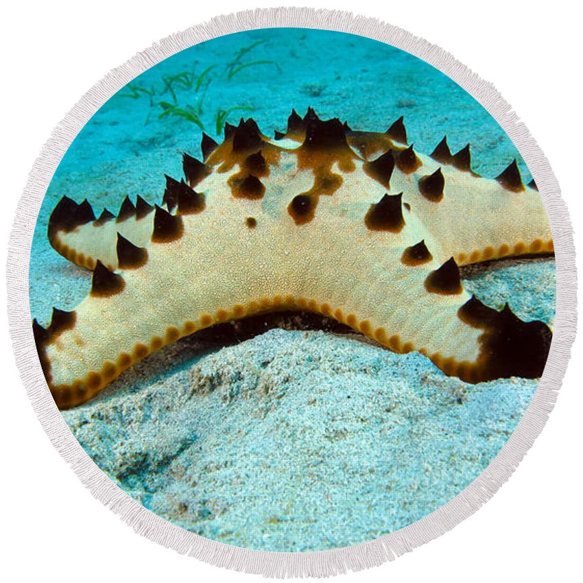 Brittle Round Beach Towel featuring the photograph Brittle Star Fish by Paul Ranky