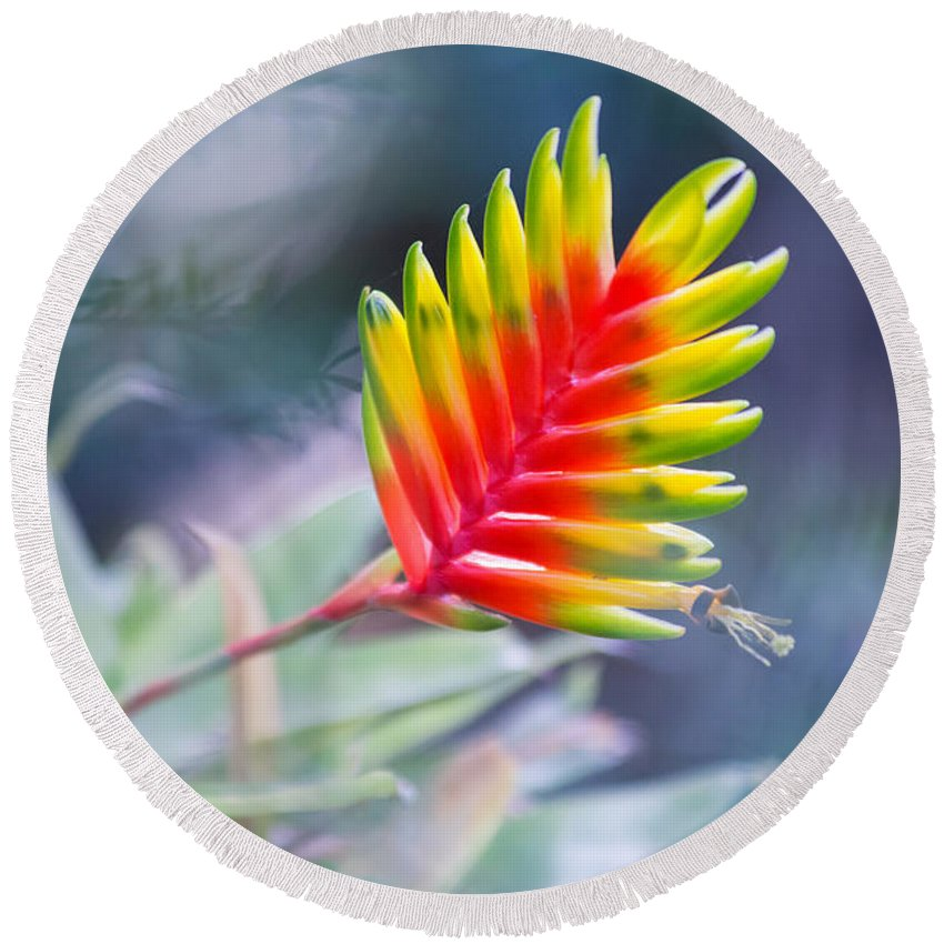 Tropical Round Beach Towel featuring the photograph Bromeliad Symphony by Eti Reid