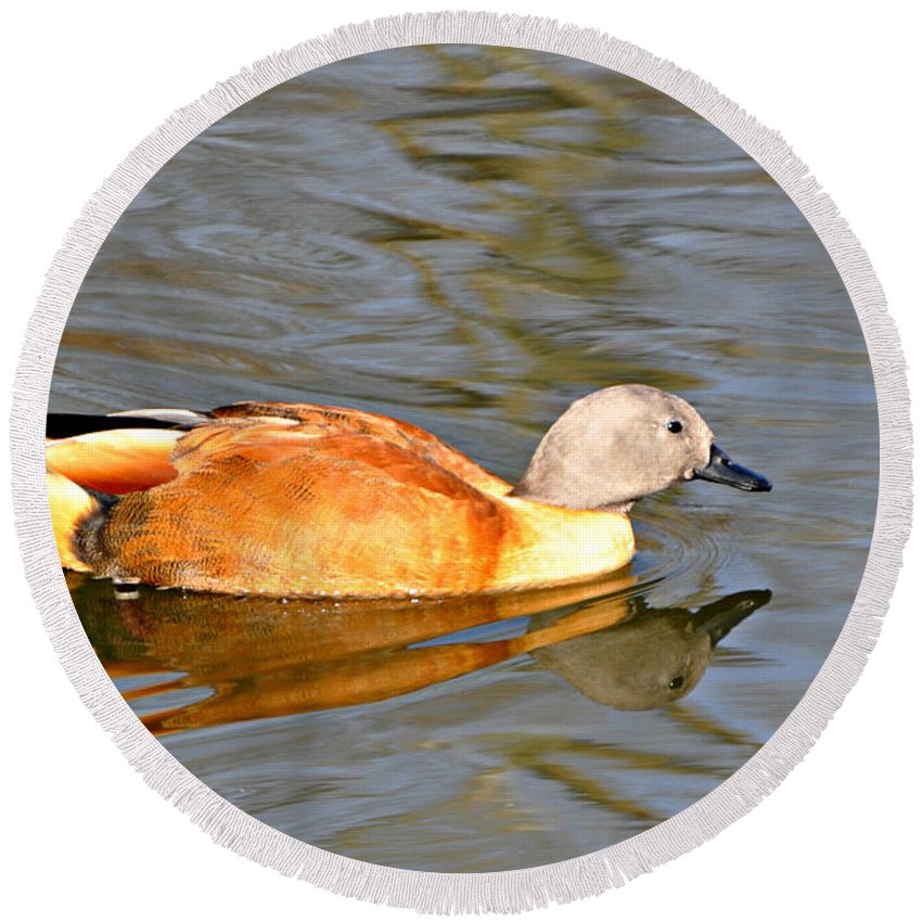 Waterfowl Round Beach Towel featuring the photograph Bronze Boy by Marty Koch