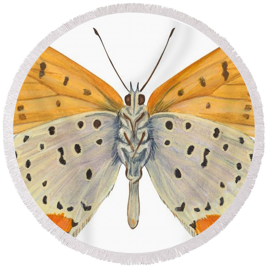 Zoology; No People; Horizontal; Close-up; Full Length; White Background; One Animal; Animal Themes; Nature; Wildlife; Symmetry; Fragility; Wing; Animal Pattern; Antenna; Entomology; Illustration And Painting; Spotted; Yellow; Bronze Round Beach Towel featuring the drawing Bronze Copper Butterfly by Anonymous