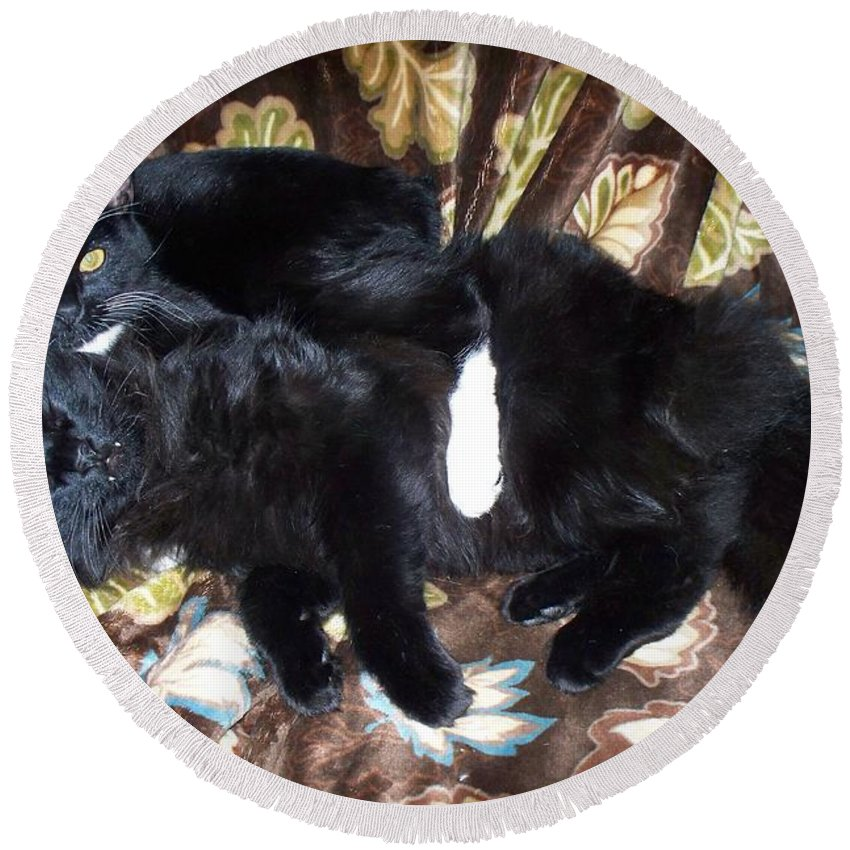 Cats Round Beach Towel featuring the photograph Brotherly Love by Lisa Wormell
