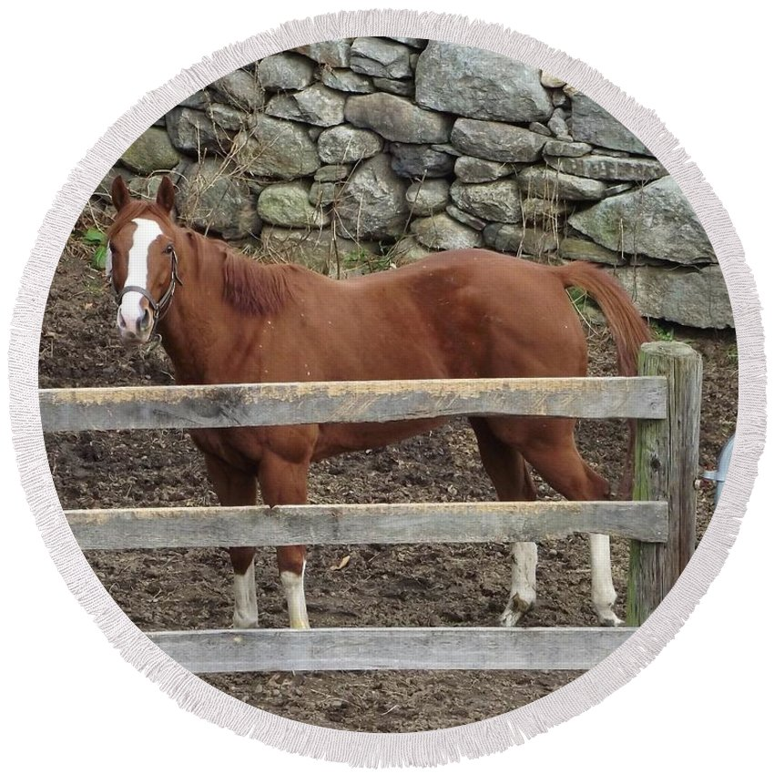 Horse Round Beach Towel featuring the photograph Brown Beauty by Michelle Welles