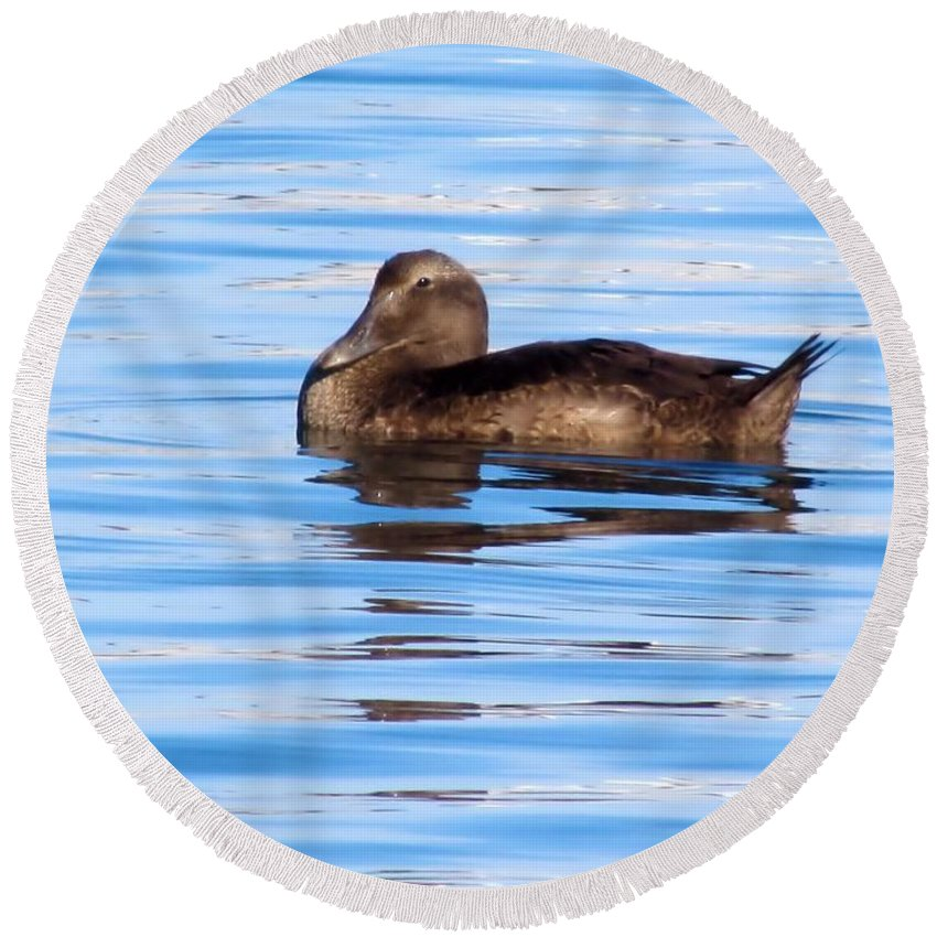Brown Duck Round Beach Towel featuring the photograph Brown Duck by Elizabeth Dow