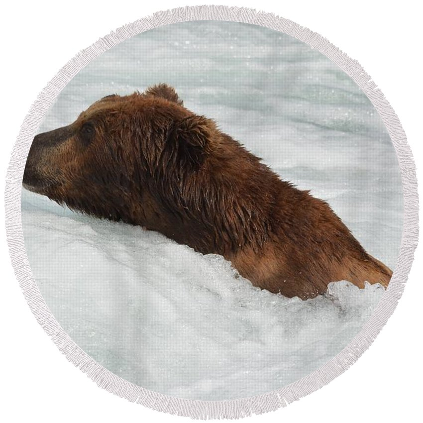 Brown Bear Swimming Round Beach Towel featuring the photograph Brown Grizzly Bear Swimming by Patricia Twardzik