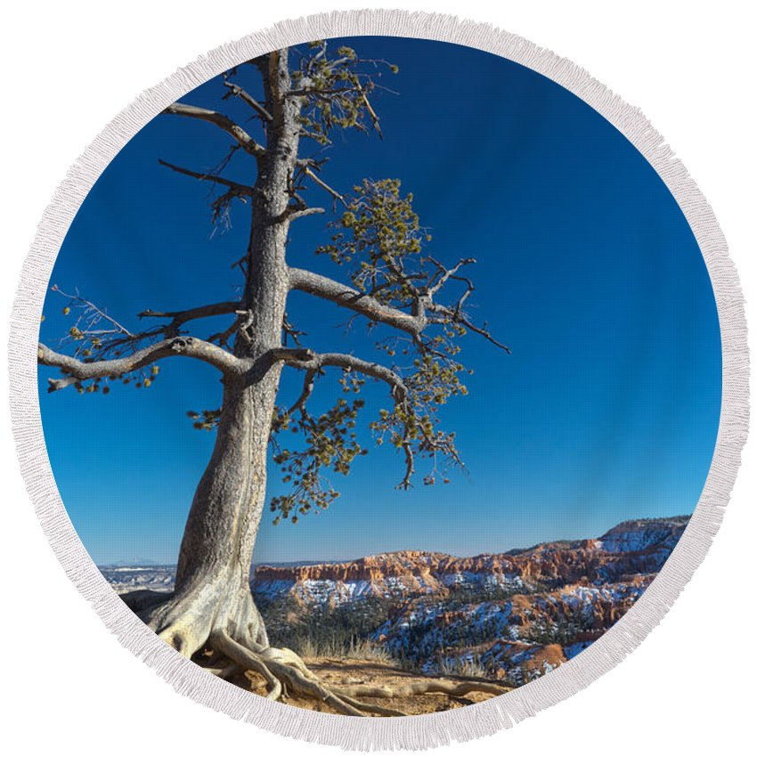 Bryce Tree Round Beach Towel featuring the photograph Bryce Tree by Tayne Hunsaker