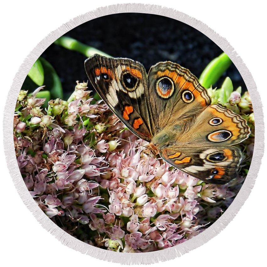 Common Round Beach Towel featuring the photograph Buckeye Butterfly On Sedum by Sharon Woerner
