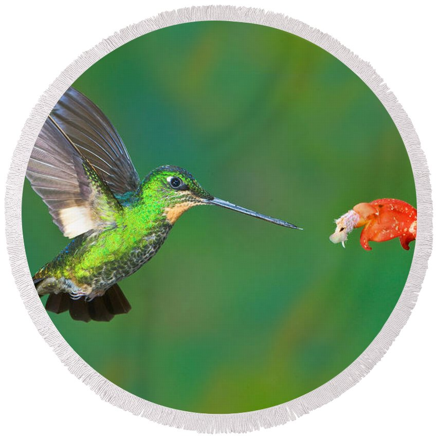 Animal Round Beach Towel featuring the photograph Buff-winged Starfrontlet by Anthony Mercieca