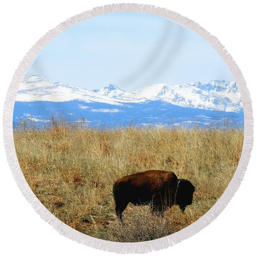 Buffalo Round Beach Towel featuring the photograph Buffalo And The Rocky Mountains by Amy McDaniel