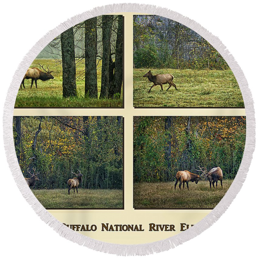 Elk Round Beach Towel featuring the photograph Buffalo National River Elk by Priscilla Burgers