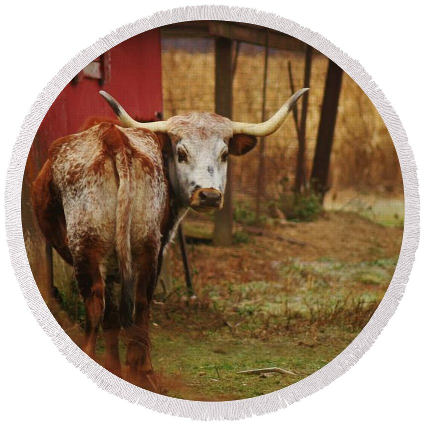 Bull Round Beach Towel featuring the photograph Bull by Dan Young