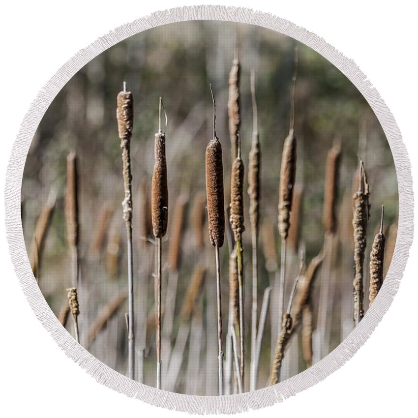 Bulrush Round Beach Towel featuring the photograph Bulrushes by Steve Purnell
