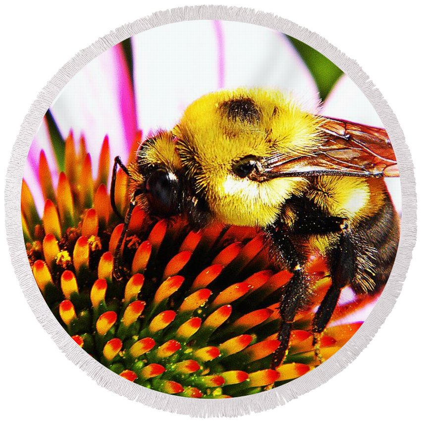 Bee Round Beach Towel featuring the photograph Bumblebee On Echinacea by Chris Berry