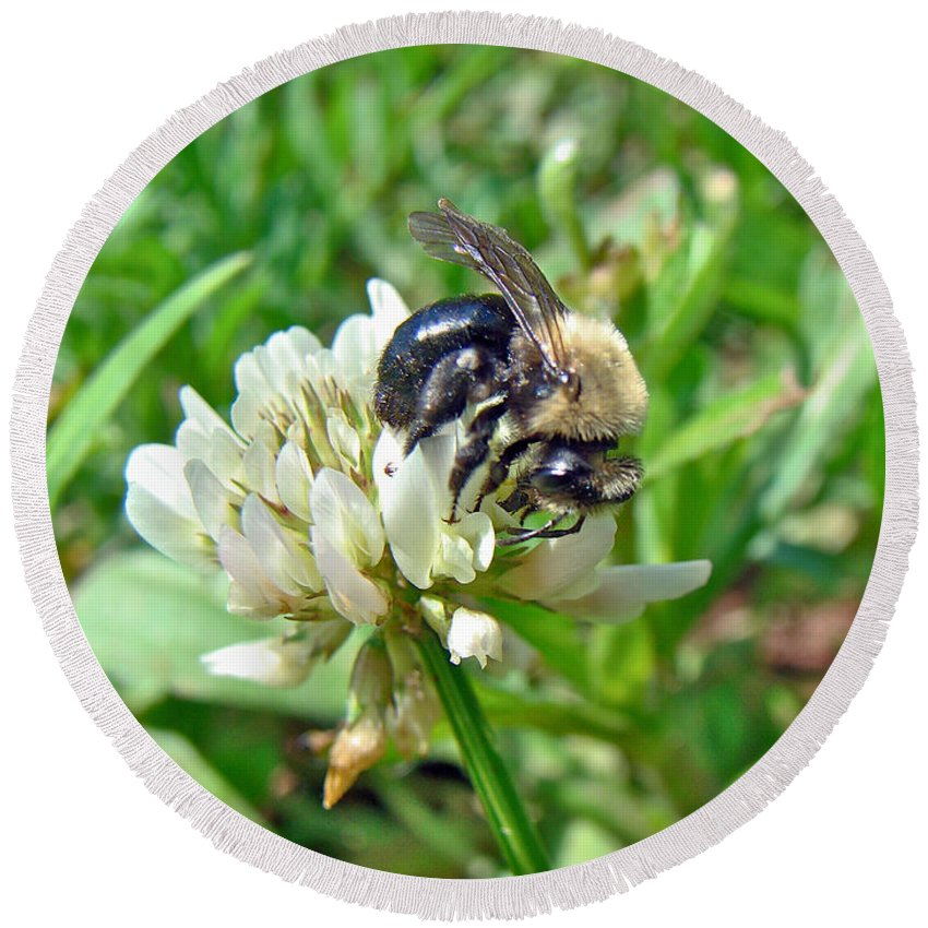 Bee Round Beach Towel featuring the photograph Bumblebee On White Clover by Mother Nature