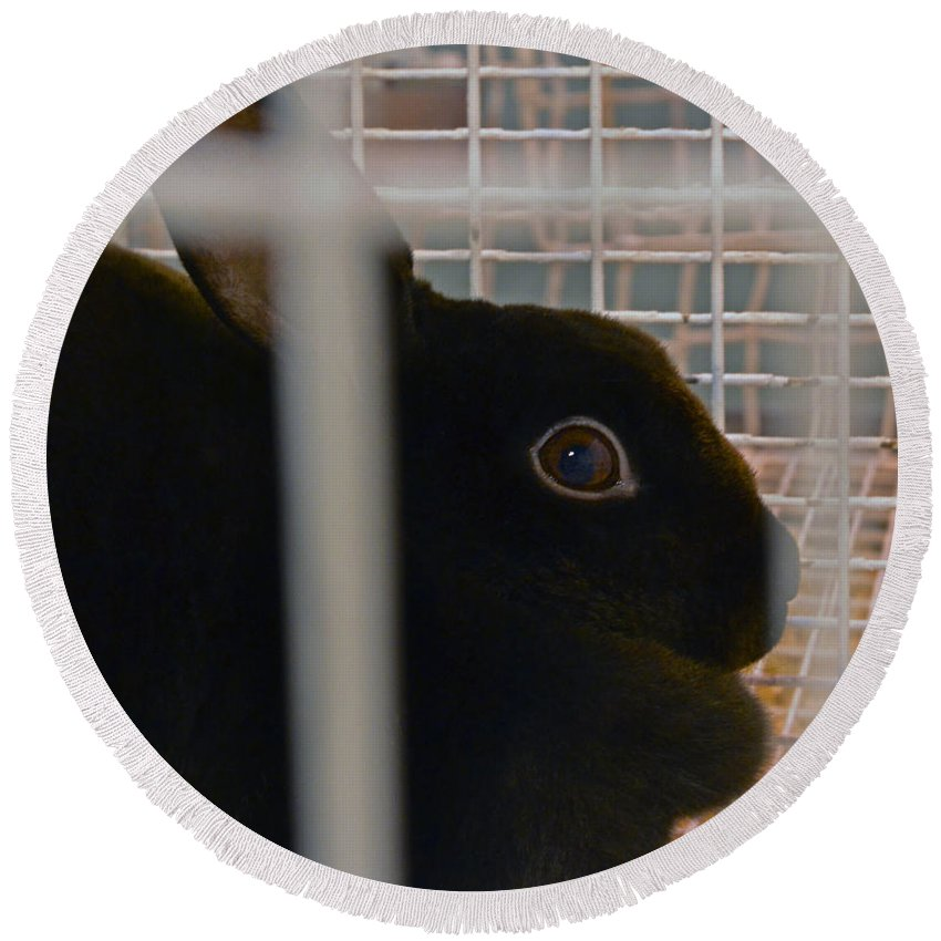 Bunny Round Beach Towel featuring the photograph Bunny by Bill Owen