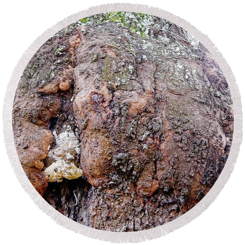 Burl Round Beach Towel featuring the photograph Burl In An Oak by D Hackett