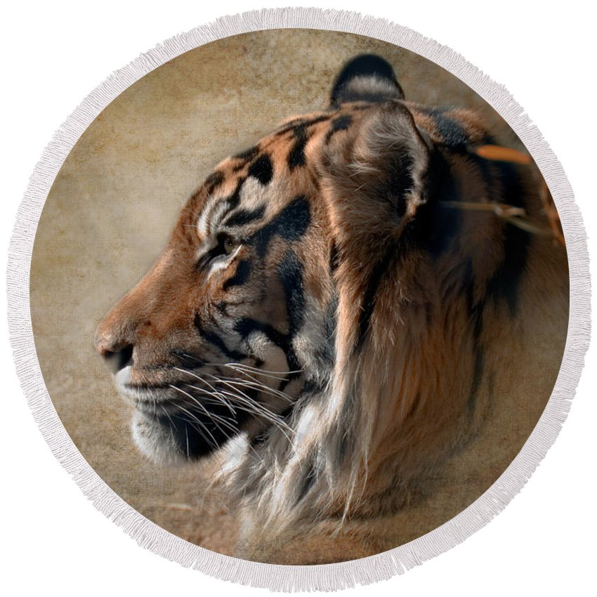 Tiger Round Beach Towel featuring the photograph Burning Bright by Betty LaRue
