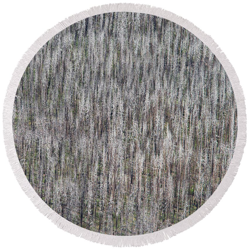North America Round Beach Towel featuring the photograph Burnt Trees Abstract II by Max Waugh