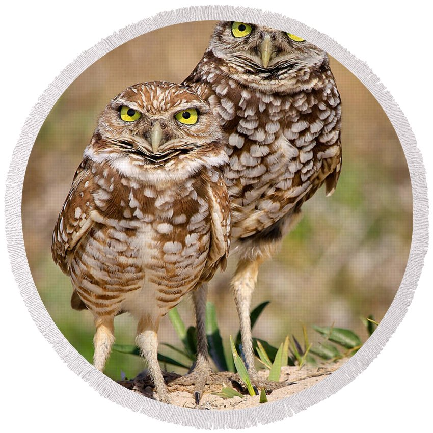 Round Beach Towel featuring the photograph Burrowing Owls by Dennis Goodman