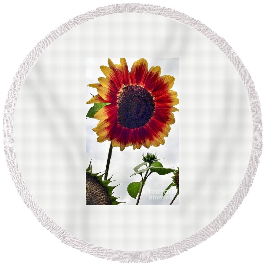 Red Sunflower Round Beach Towel featuring the photograph Burst Of Sunflower by Susan Garren
