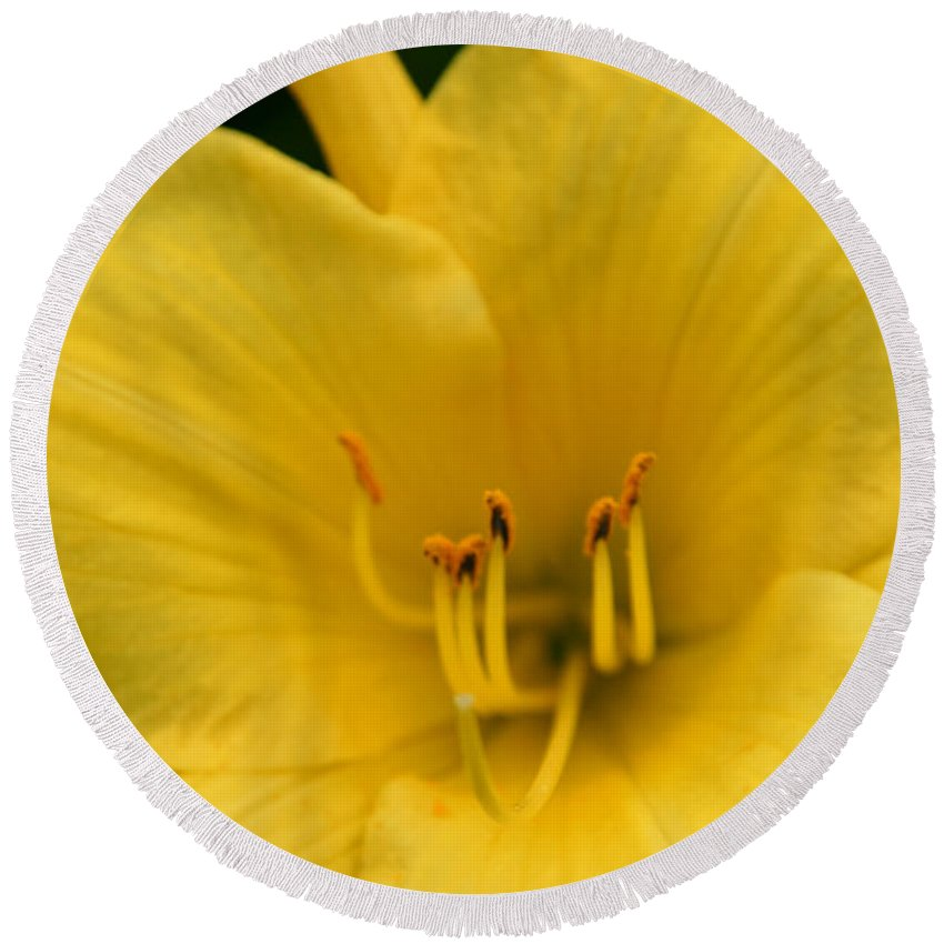 Burst Of Yellow Round Beach Towel featuring the photograph Burst Of Yellow by Denyse Duhaime