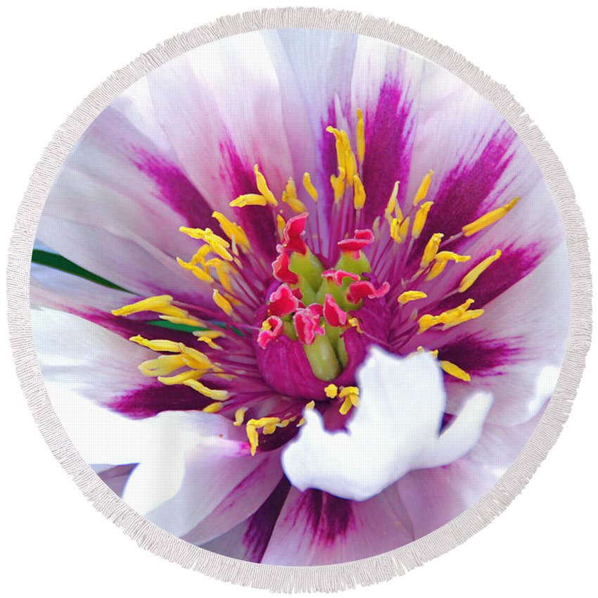Bursting With Life Round Beach Towel featuring the photograph Bursting With Life by Byron Varvarigos