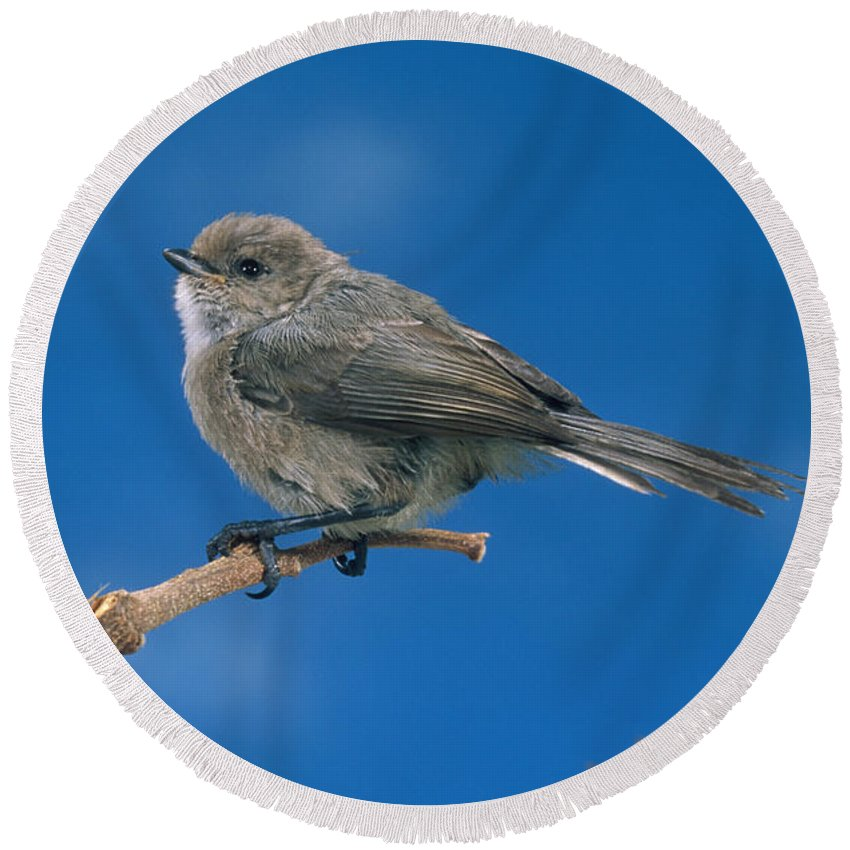 Animal Round Beach Towel featuring the photograph Bushtit by Anthony Mercieca
