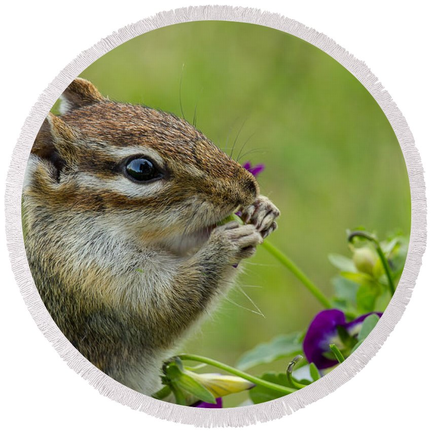 Chipmunk Round Beach Towel featuring the photograph Busted by Penny Meyers