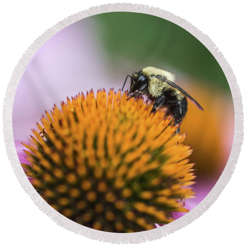 Bee Round Beach Towel featuring the photograph Busy Bee On Cone Flower by Vishwanath Bhat
