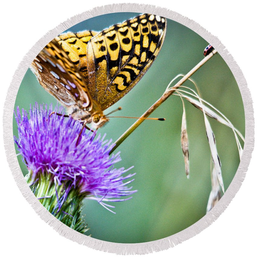 Great Spangled Fritillary Butterfly Round Beach Towel featuring the photograph Butterfly Beauty And Little Friend by Cheryl Baxter