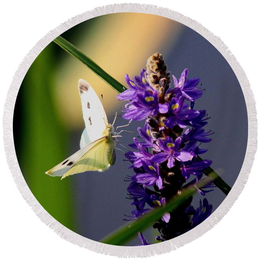 Butterfly Round Beach Towel featuring the photograph Butterfly - Cabbage White by Travis Truelove