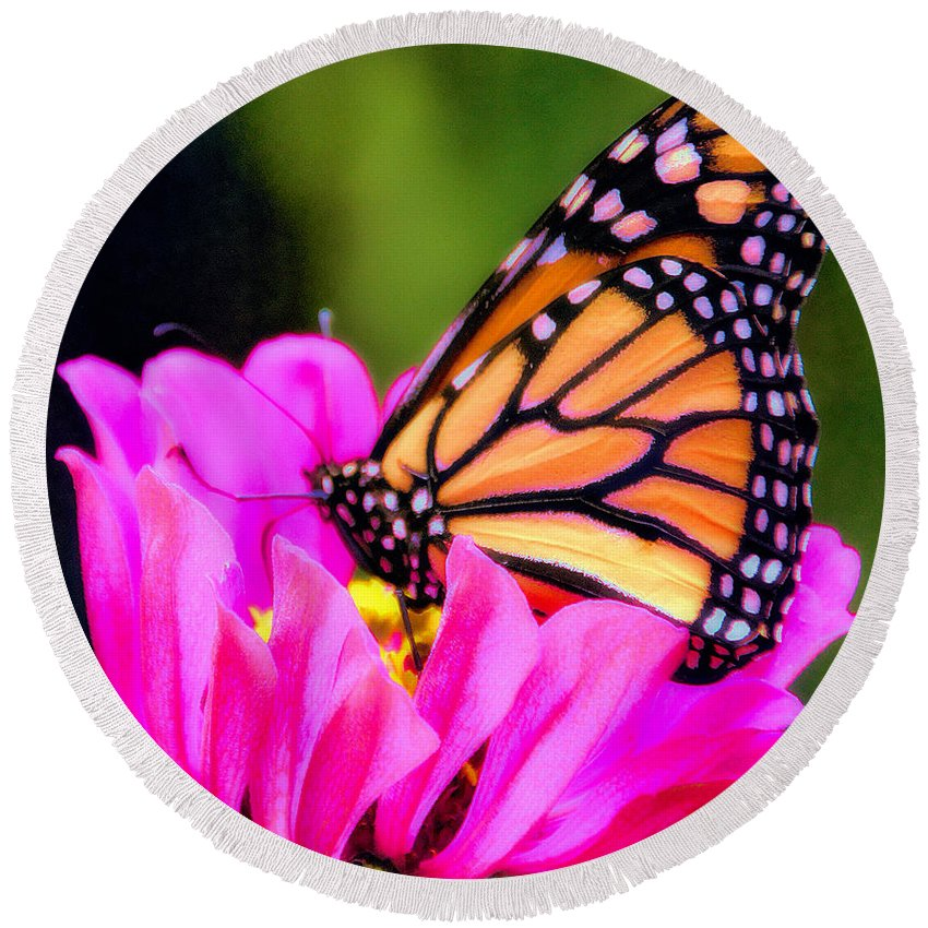 Monarch Butterfly Round Beach Towel featuring the photograph Butterfly Cup by Elizabeth Winter