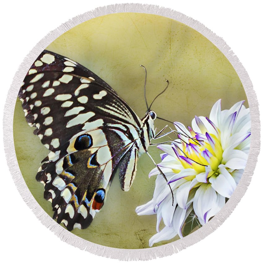 Common Garden Butterfly Round Beach Towel featuring the photograph Butterfly Food At Dahlia Flower by Ronel Broderick