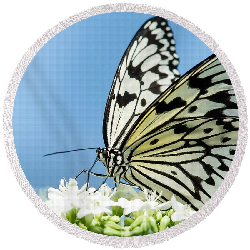 Albert Ginter Botantical Gardens Round Beach Towel featuring the photograph Butterfly On Blue by Cindy Archbell