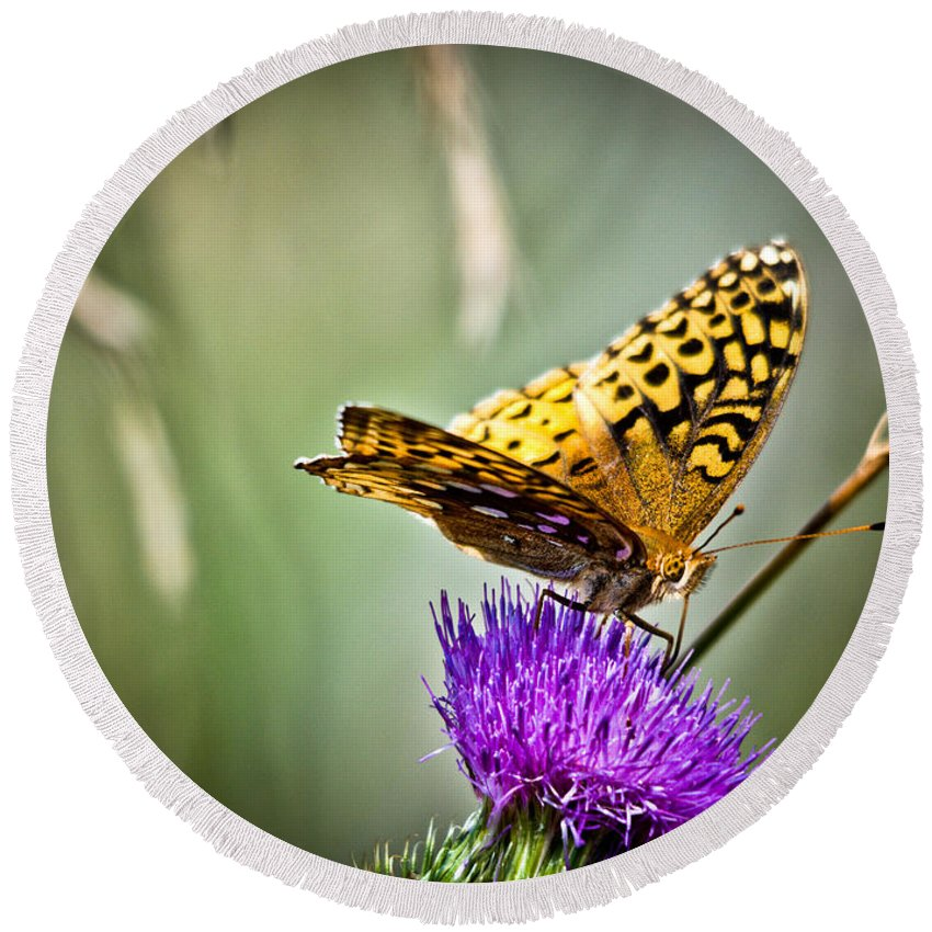 Great Spangled Fritillary Butterfly Round Beach Towel featuring the photograph Butterfly On Thistle by Cheryl Baxter