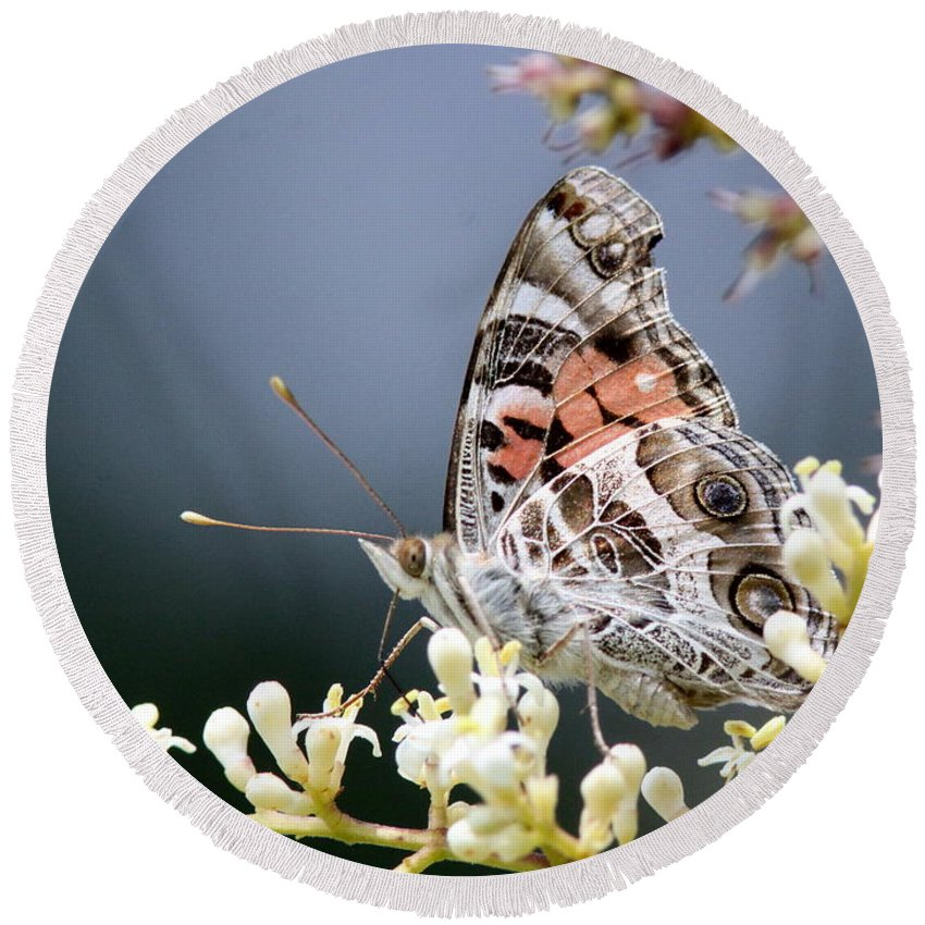Lady Round Beach Towel featuring the photograph Butterfly - Painted Lady - Tasty Out Here by Travis Truelove