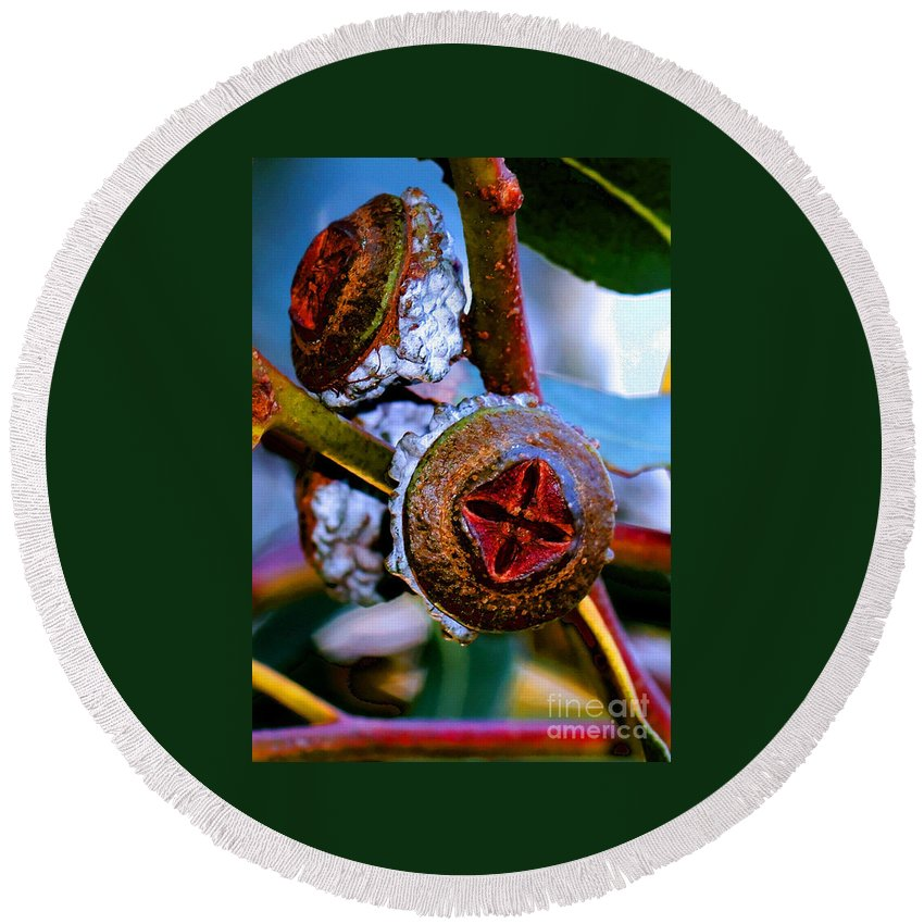 Trees Round Beach Towel featuring the photograph Pacific Northwest Washington Button Seed Pod by Tap On Photo