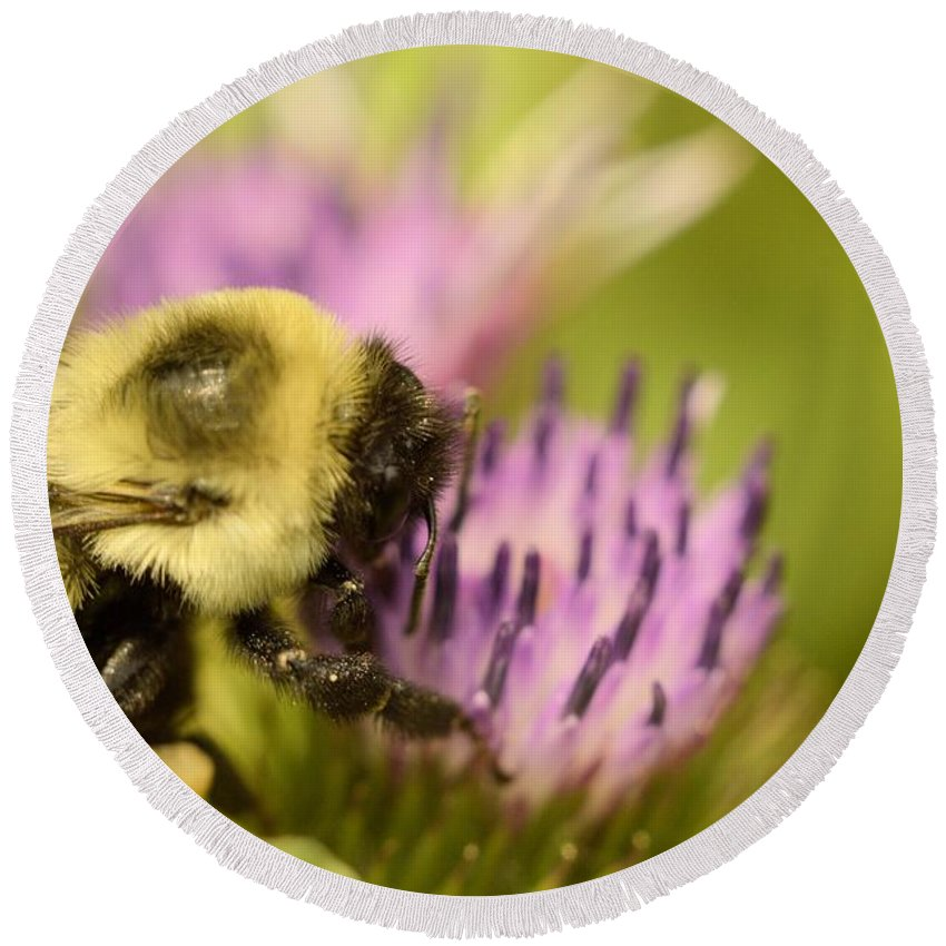 Bee Round Beach Towel featuring the photograph Buzzy Bee by Bonfire Photography