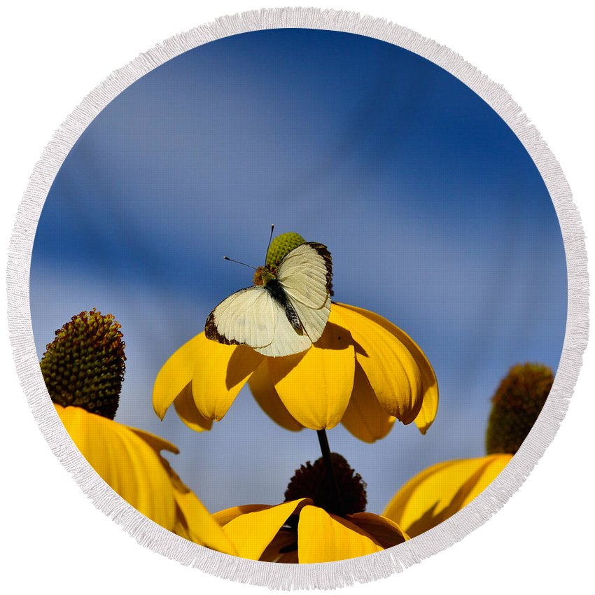 Above Round Beach Towel featuring the photograph Cabbage White Butterfly by TouTouke A Y